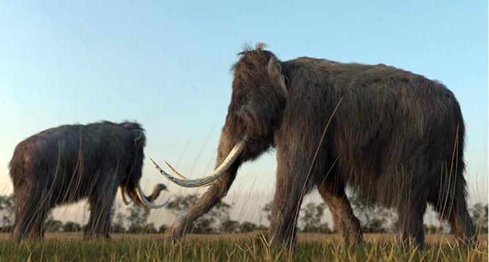 Naučnici izvukli DNK iz životinje stare milion godina
